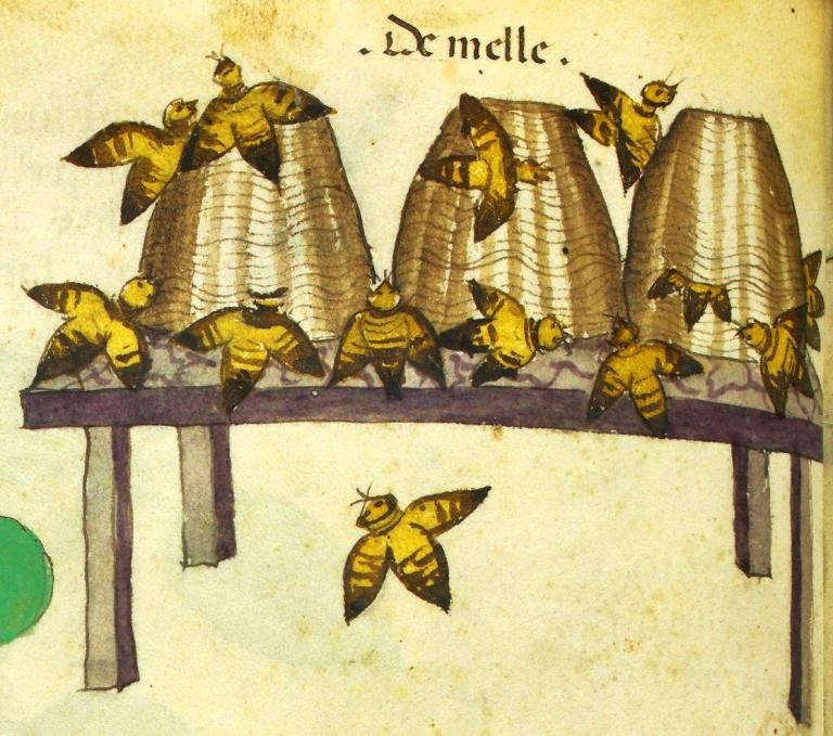 ein fragment über insektenmythologien und darstellungen